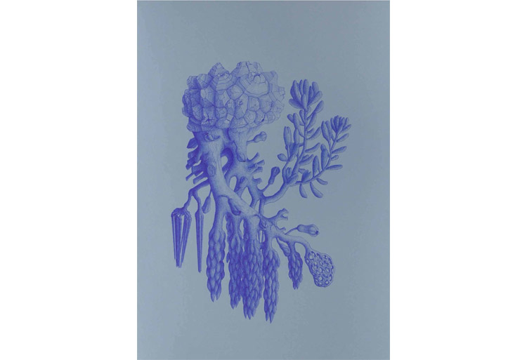 #gaiacarboni #contemporaryart #contemporarydrawing #italianartists #artemetafisica #ernsthaeckel #luisadellepiane #marsmilano #surrealism #artevisionaria #surrealismo